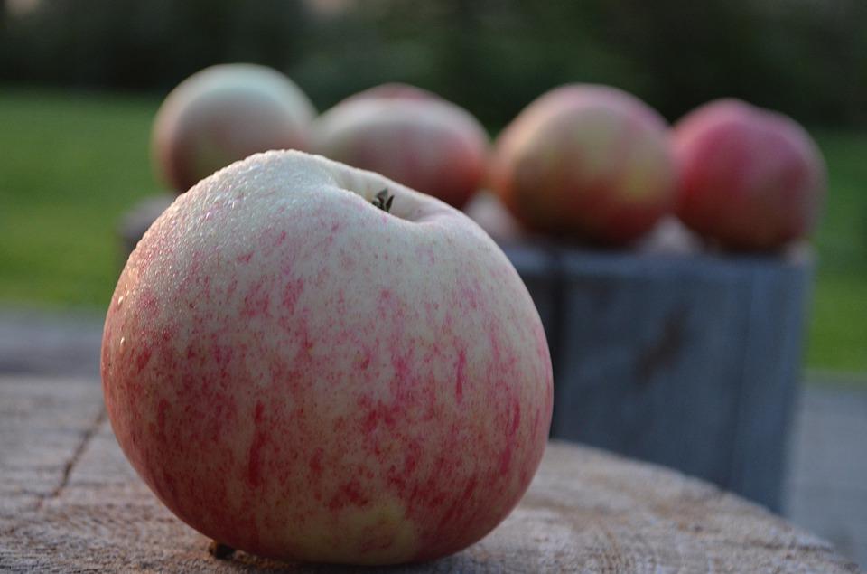 festa del Salvatore delle mele