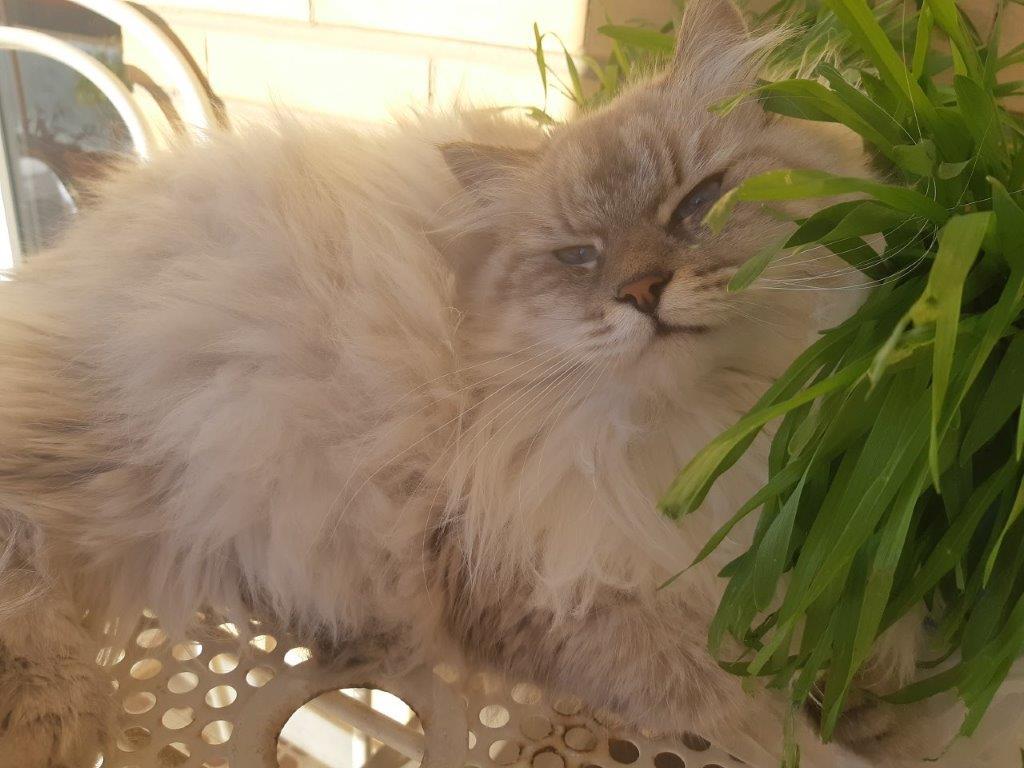 gatti nelle favole russe