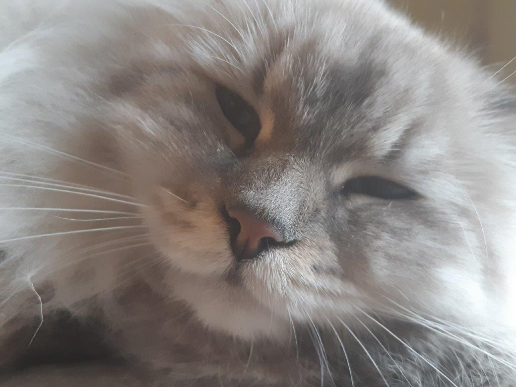 Perché le favole russe amano i gatti